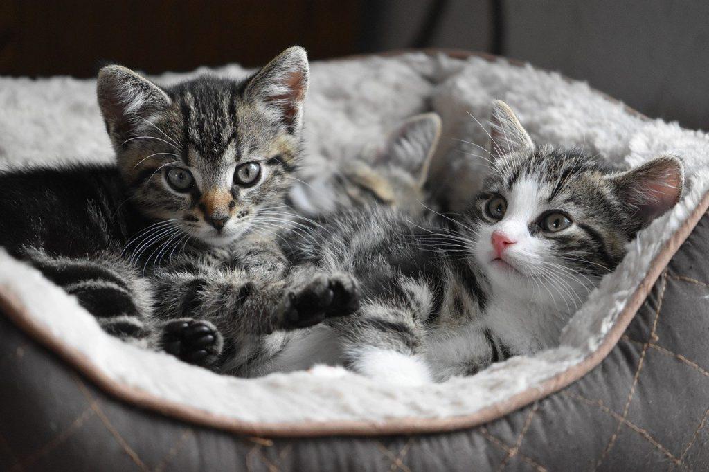 Kleine Kätzchen im Korb